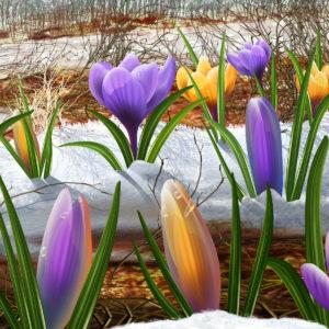 Джйотиш на каждый день, для 15 марта