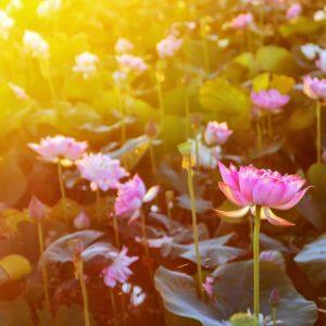 30 мая — пост на экадаши