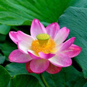 13 июня — пост на экадаши