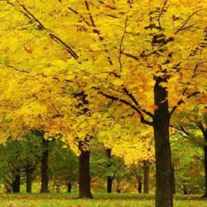 Джйотиш на каждый день, для 24 октября