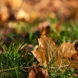Джйотиш на каждый день, для 6 ноября